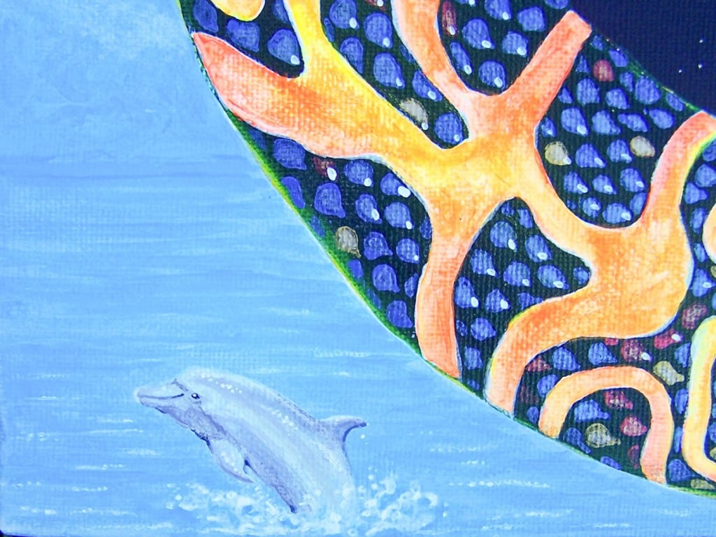 Sachamama Stargazer - Dolphin Detail
