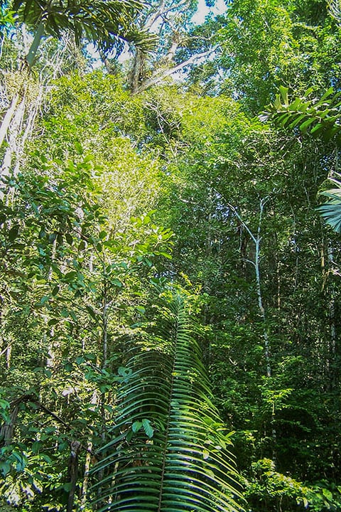 Rainforest-by-Christine-Marsh