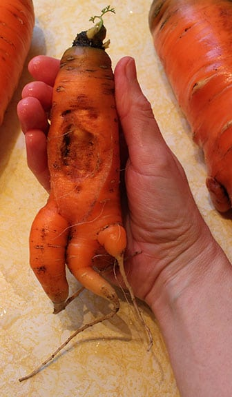 Carrot-Rocketship