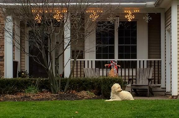Dog-Lights-Christine-Marsh