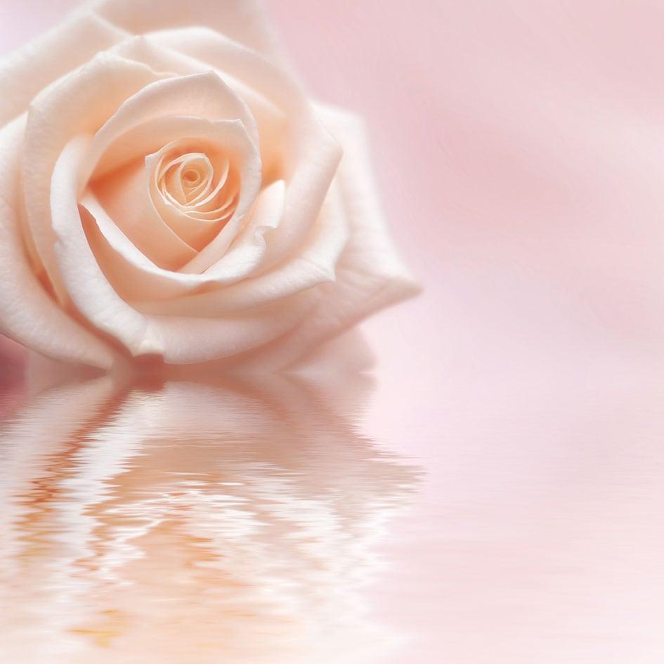 Rose-Deposit-Photos