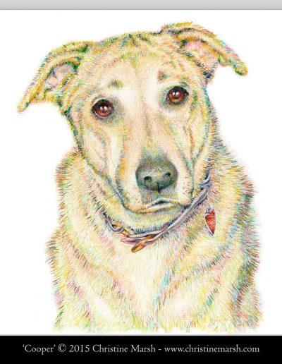 Cooper - dog art